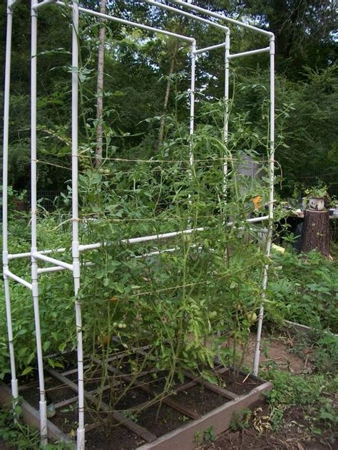Pvc Tomato Trellis pvc trellis how my garden will grow