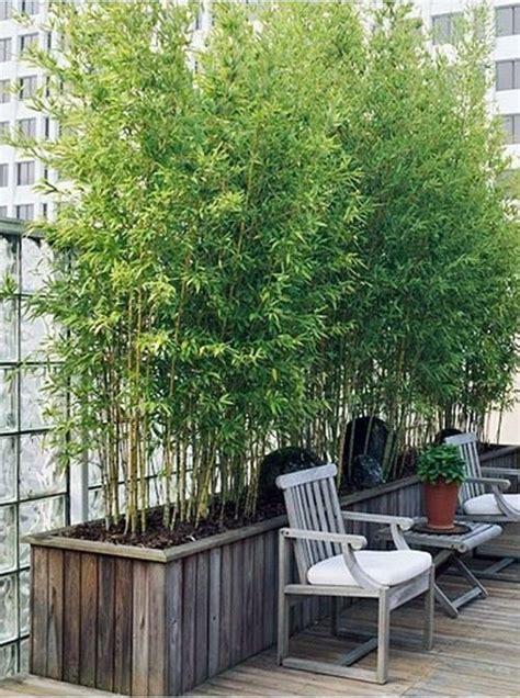 tips  growing bamboo plants  pots