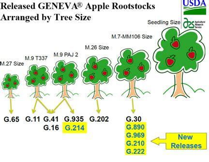 fruit tree spacing chart apple edible landscaping