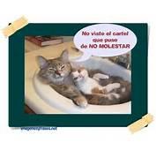 Imagenes Y Frases De Gatos Graciosos