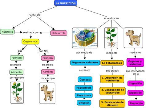 cadenas troficas introduccion ciencia tecnolog 237 a y ambiente en santa anita nutrici 243 n