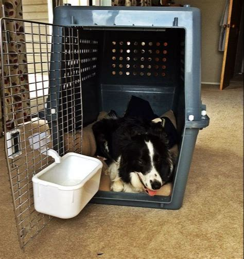 puppy crate tips puppy crate tips uk dogs in our photo