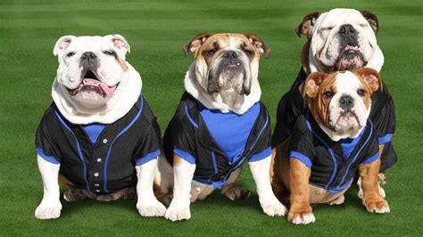 dogs baseball thought experiment air bud with derek jeter instead of a notgraphs baseball