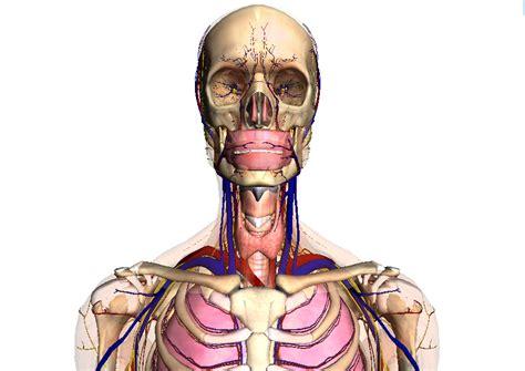 imagenes artisticas del cuerpo humano gif animados del esqueleto humano imagui
