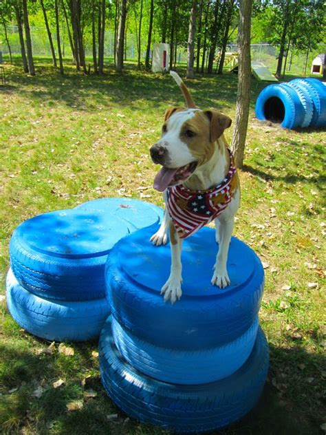 backyard agility course 8 dog friendly backyard ideas healthy paws