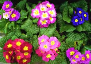 early blooming spring perennials