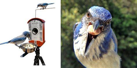 bird photography bird feeders  wild bird feeders