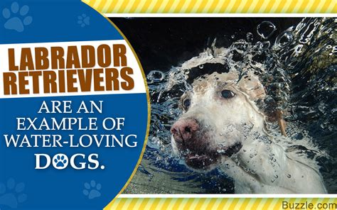 dogs that like water 10 breeds that like water and make excellent swimmers