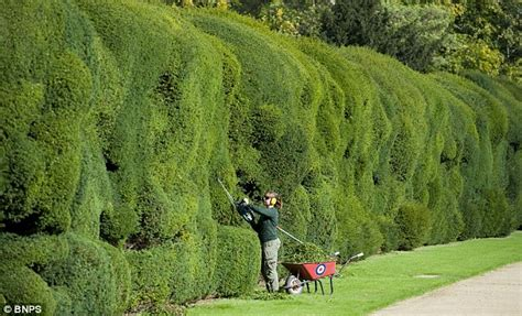 Montacute House 4 Gardeners To Spend Three Months Trimming Montacute House