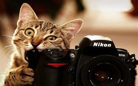 cat untuk wallpaper funny animals hd wallpapers