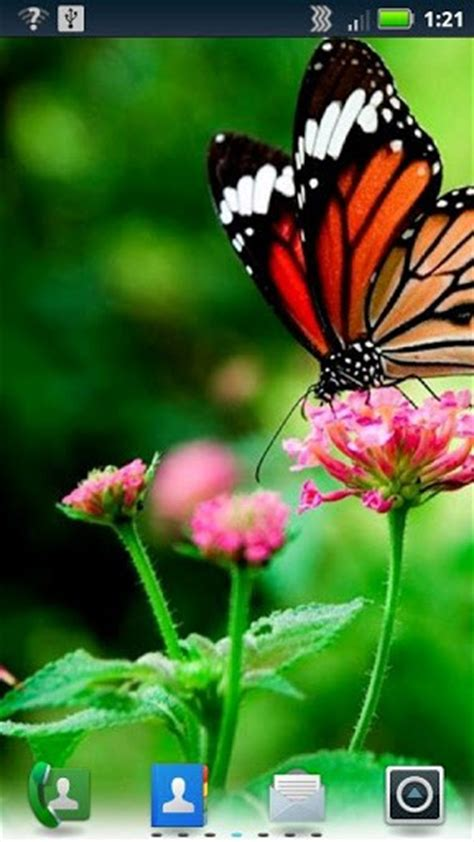 live butterfly themes download butterflies live wallpaper for android by socks n