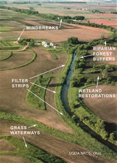 Integrated Disease Management In Plants - forested riparian buffer