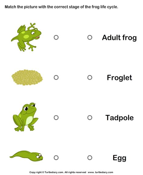 Cycle Of A Frog Worksheet frog cycle match pictures with correct name worksheet