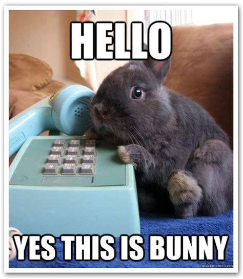 Angry Bunny Meme - the first talking bunny animals pinterest bunny