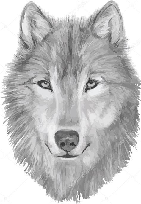 desenho de lobos lobo illustartion m 227 o desenhada desenho de lobo cara de