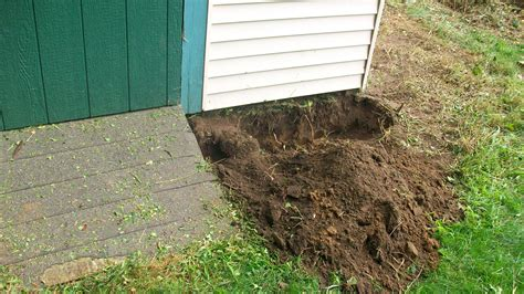 Rats Shed by Rat Wall Eviction Nuisance Wildlife