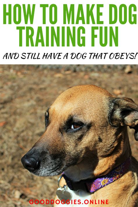 make bathtime fun for your dog how to make bath time fun how to make dog training fun and still have a dog that obeys