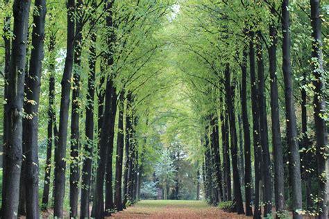images gratuites paysage arbre lumiere du soleil vert
