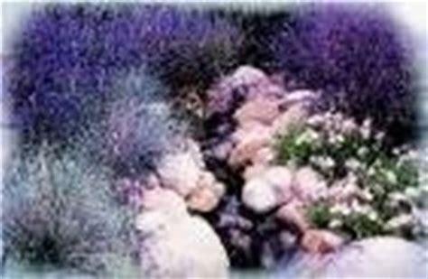 giardini rocciosi in ombra creare giardino roccioso giardino fai da te