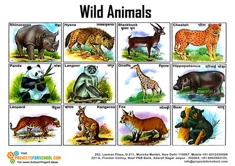 kids science projects wild animals
