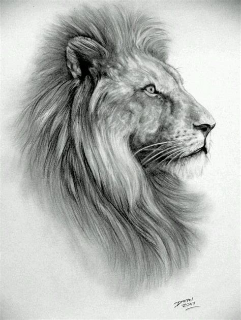 lion tattoo sketch sketch pencil drawin alina stitches