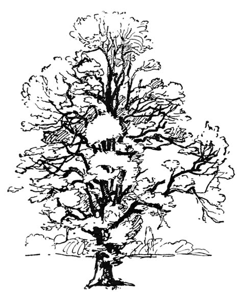 coloring pages of neem tree tree coloring pages