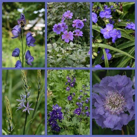winter bloemen australie 25 beste idee 235 n over blauwe tuin op pinterest
