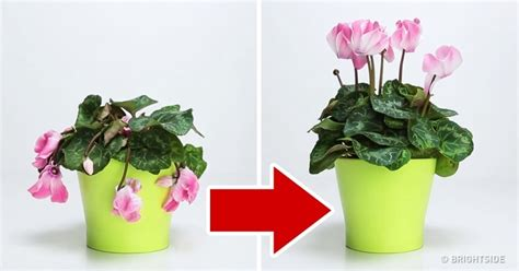 how to bring a dead plant back to life 3 ingredients that will bring your favorite plant back to life