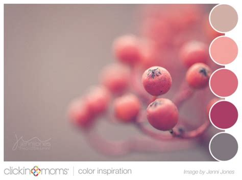 color inspiration color palette inspiration pink and gray berries from