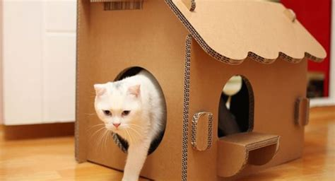 cat house designs indoor best cat house indoor photos decoration design ideas ibmeye com
