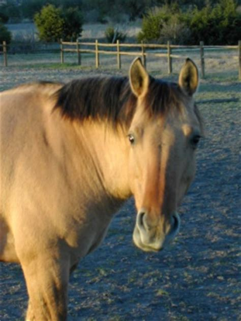 colors explained black horses buckskins blood bay and paint horses