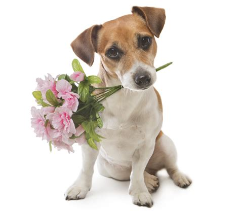 dogs with flowers animals with flowers to make you smile petal talk