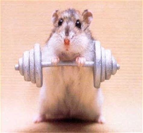 imagenes animales haciendo ejercicio animals haciendo ejercicio