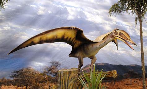 imagenes reales wikipedia file dinosaurios park pterosauria jpg wikimedia commons