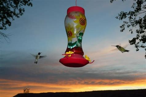 black mesa bed and breakfast hours watching the hummingbirds picture of black mesa