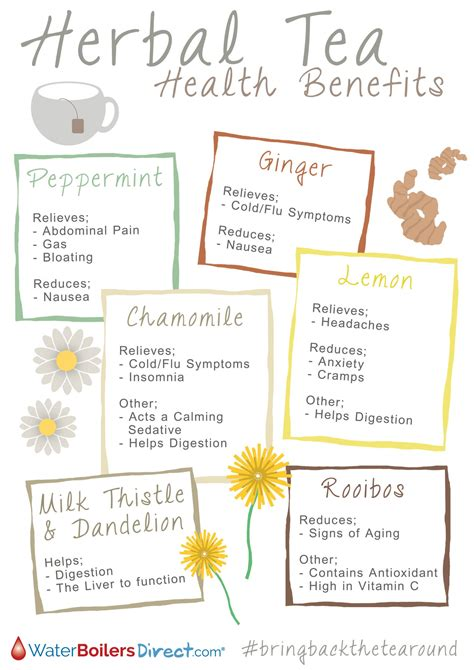 Different Types Of Detox Tea by Herbal Tea Health Benefits Visual Ly