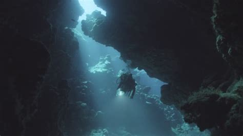 coraux du pacifique coral reef adventure fiche film cin 233 ma canoe ca animation creative stock footage collection framepool rightsmith stock footage