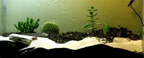 start   desert terrarium cj julian