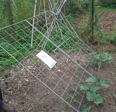 whats a trellis what s happening in greenbelt s community garden behnke