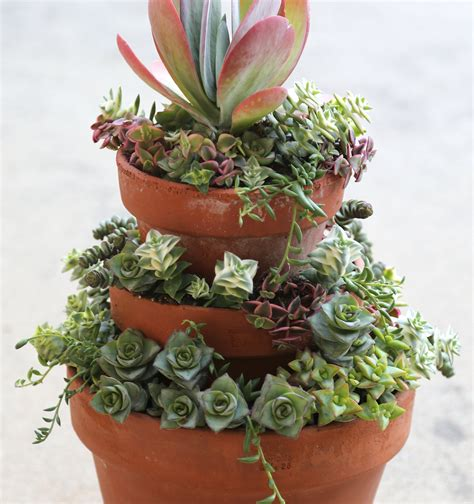 Pot Gantung Econy No 6 plant stacked crassulas in stacked pots