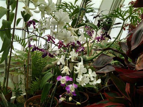 veranda orchid loving the san francisco conservatory of flowers ground