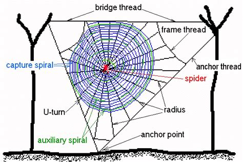 Garden Spider Diagram How To Make A Spider Web Obstacle Course Natured
