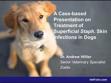 staph infection in dogs a based presentation on treatment of staph skin