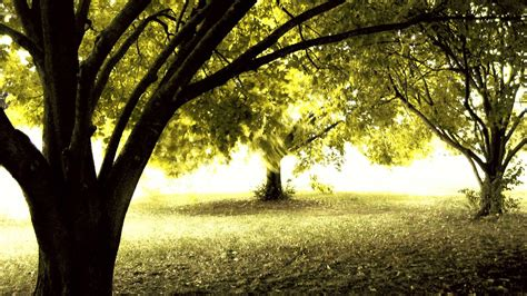 tree background hd photos high definition amazing nature tree backgrounds widescreen and hd background wallpaper