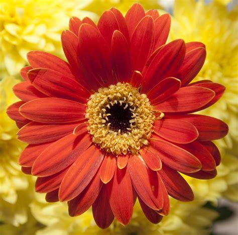 Orange Flowery file orange flower 3604505799 jpg wikimedia commons