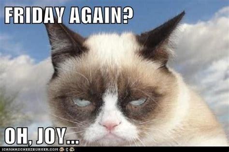 Grumpy Cat Friday Meme - 26 best all things grumpy cat images on pinterest grumpy
