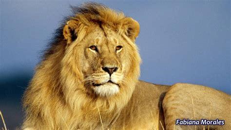 imagenes de animales terrestres animales terrestres acu 193 ticos y a 201 reos youtube