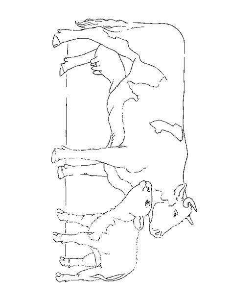 baby cow coloring sheets coloring pages