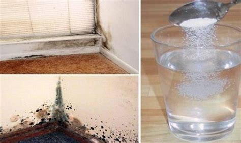 get rid of the mold in no time and naturally just by