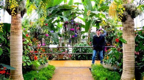 Chicago Botanic Garden Orchid Show Orchid Show Blooms Away Winter Chill Medill Reports Chicago
